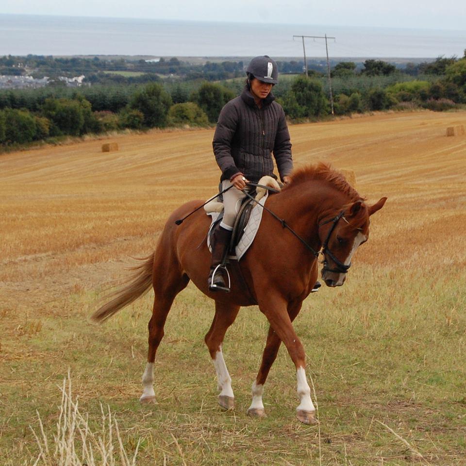 dermite estivale du cheval